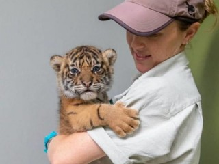 Exotic Cat & Kittens, Parrots, Tiger cubs and Lion cubs for sale